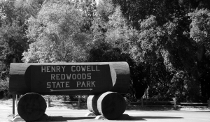 henry cowell redwoods hiking