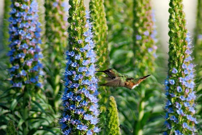 hummingbird photography laguna beach