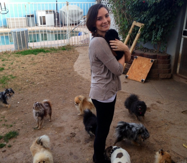 23 So Many Pomeranians!