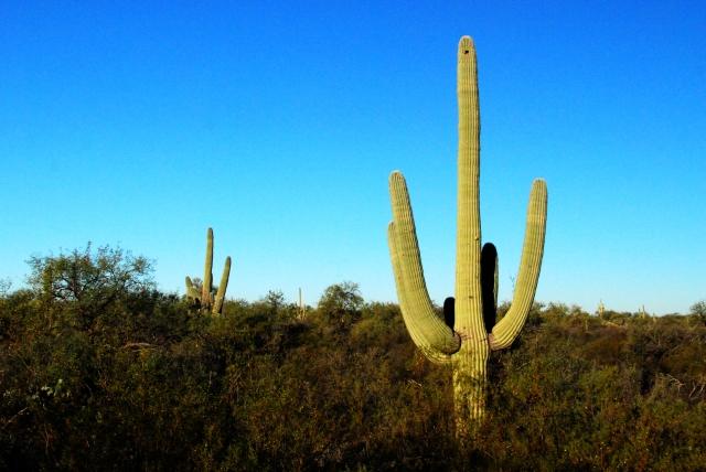 Saguaro NP (10)