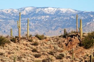 Saguaro NP (1)