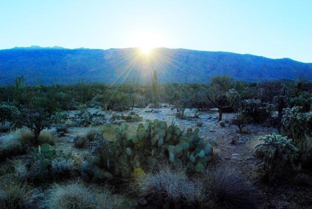 Saguaro NP (4)