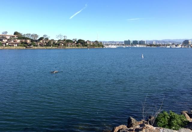 Biking Malibu to Newport (8)