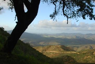 Otay Mountain (37)