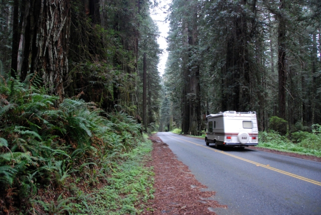 redwood-highway-23