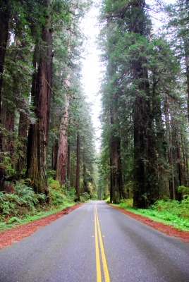 redwood-highway-25