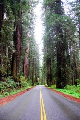 redwood-highway-25