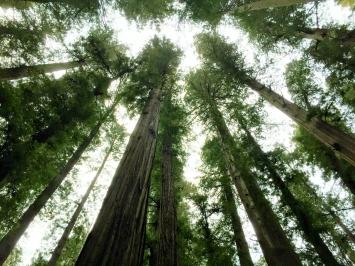 redwood-highway-26