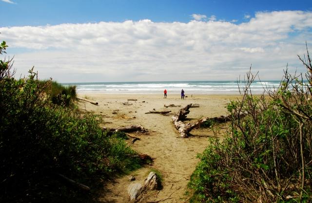 driftwood-beach-5