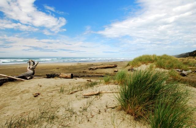 driftwood-beach-6