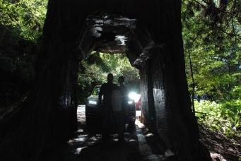 Tour through Tree (5).JPG