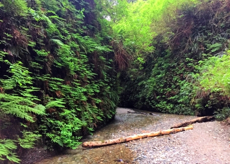 Fern Canyon (7)