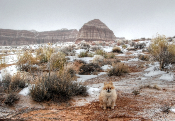 Coyote Buttes (14)