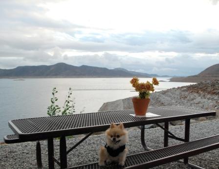 Diamond Valley Lake (4)