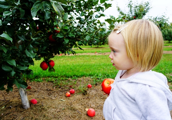 Apple Festival (17)