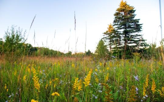 Princeton Wilderness (19)